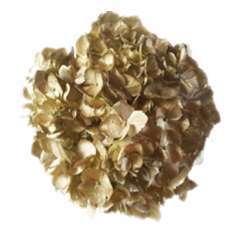 Airbrushed Premium Hydrangea Metallic Gold