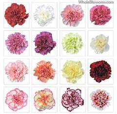 Assorted Fresh Carnations