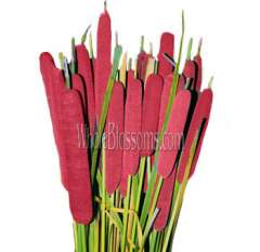 Red Tinted Cattail Filler Flower