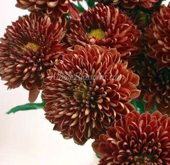 Mum Cremon Dark Red Maroon Flower