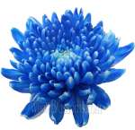Cremon Tinted Blue Flower