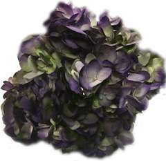 Purple Hydrangea Deep Eggplant Color