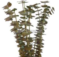 Eucalyptus Metallic Gold Yellow Flower Filler