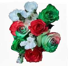 Holiday Stocking Stuffer Rainbow Rose Collection