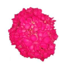 Hot Pink Neon Airbrushed Hydrangeas
