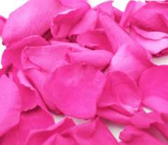 Valentine's Day Hot Pink Rose Petals