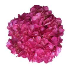 Metallic Hot Pink Glitter Airbrushed Hydrangea