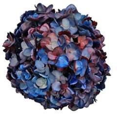 Red Hydrangea Patriot Blue Silver Chameleon