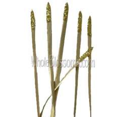 Lily Grass Glitter Gold Flower Filler