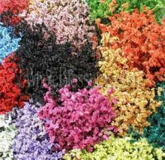 Limonium Tinted Assorted
