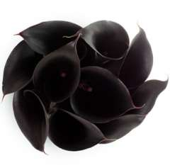 Long Dark Purple Mini Callas