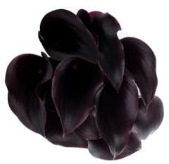 Dark Purple Mini Callas Long