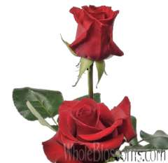 Love Story Red Rose