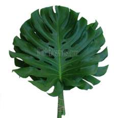 Monstera Leaves Filler
