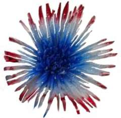 Spider Mums White Red Blue with Silver Glitter