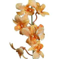 Dyed Orange Dendrobium Orchid