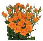 Valentine's Day Orange Spray Roses