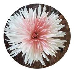 Pink Center Anastasia Wholesale Mums