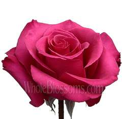 Princess Hot Pink Roses