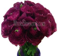 Ranunculus Purple Flower
