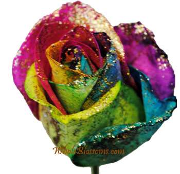 Rainbow Glitter Rose   Wholesale Roses With Glitter