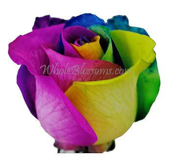 Rainbow rose mulit colored roses dyed tinted roses for for How much are rainbow roses