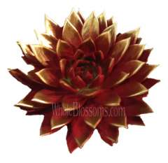 Red / Gold Painted Succulent Flower