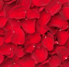 Valentine's Day Red Rose Petals