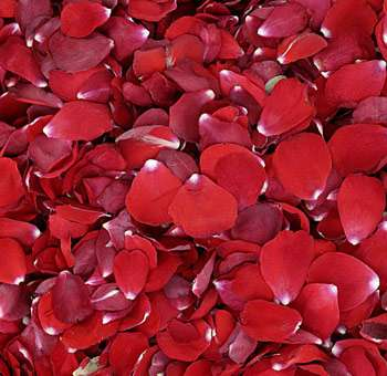 Red Rose Petals for Weddings and Events