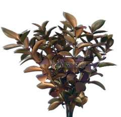 Ruscus Metallic Bronze Flower Filler
