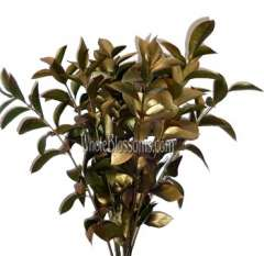 Ruscus Yellow Gold Flower Filler