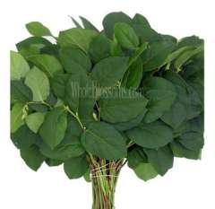 Salal Tips Lemon Leaf Flower
