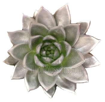 Succulent Painted Silver Flower
