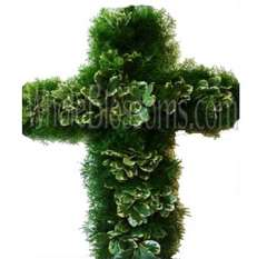 Springeri-Varigated Pittosporum Cross Flower Filler