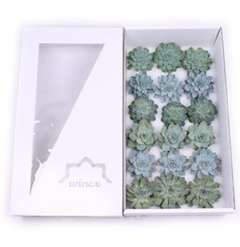 Succulents Aqua Gift Box