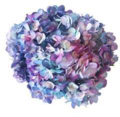 Tie Dye Turquoise Hot Pink Lavender Hydrangea