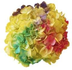 Tie Dye Yellow Hot Pink Purple Green Hydrangea Flowers