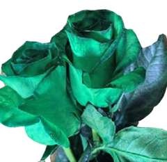 Tinted Green Rose Holiday Flowers