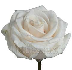 Vendela Rose Flower