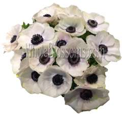 White Anemone Flowers Dark Center