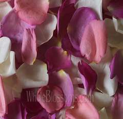 MIx Dark Pink White Rose Petals