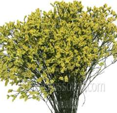 Limonium Tinted Yellow Flower