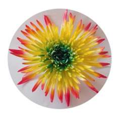 Yellow-Orange Green Spider Mum