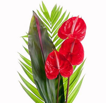 Anthurium Tropical Flower Centerpiece