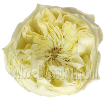 Peony Spray Garden Rose Cream Antique Romantica