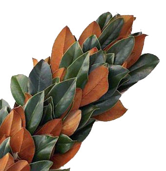 Magnolia Garland Bulk Fresh Magnolia Leaves At Wholesale Prices