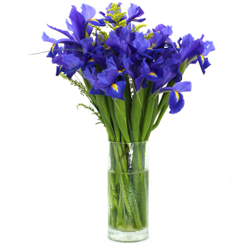 Flower Shop Names on Wholesale Iris   Buy Iris Wedding Flowers By Wholeblossoms Com