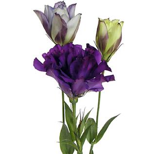Wholesale purple flowers for wedding purple lisianthus flower thecheapjerseys Choice Image