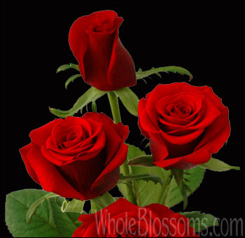 Wholesale Red Rose Rouge Baiser