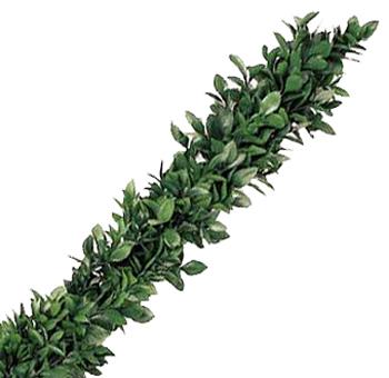 Ruscus Garland Wholesale Fresh Cut Garland Greenery